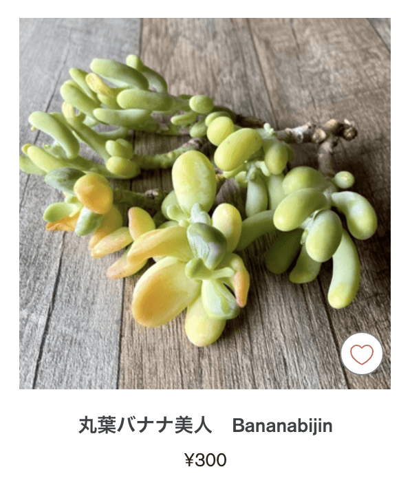 多肉植物の通販 tawawa